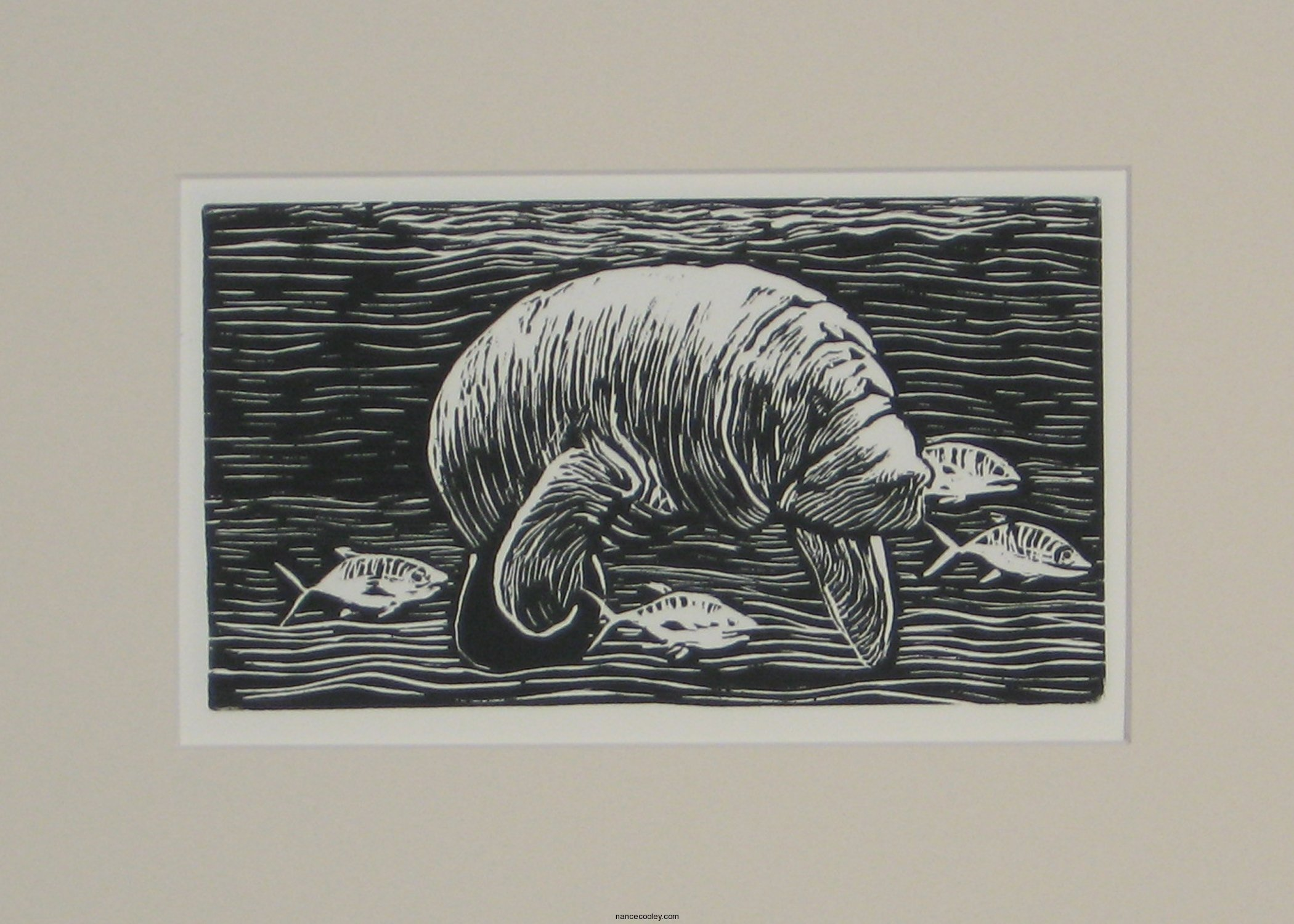 Cooley - Florida Manatee