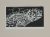 Cooley- Green Sea Turtle